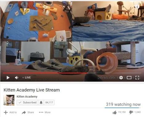 kitten-academy